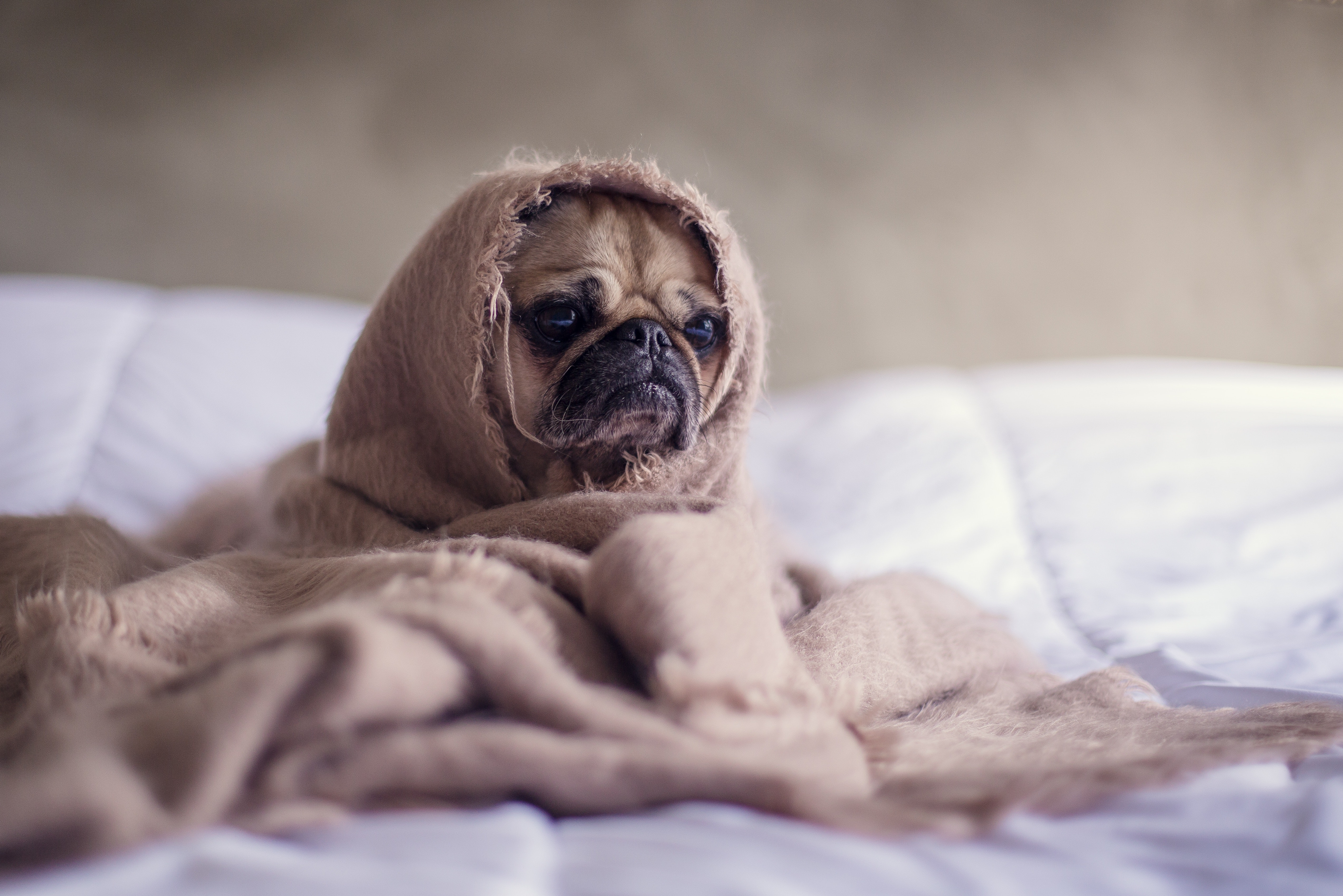 Il Cane Vomita? Sintomi, Cause e Rimedi