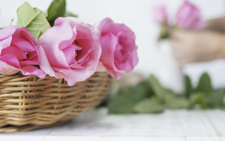 Come Curare le Rose - Corriere DelleDame